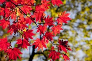 saison automne